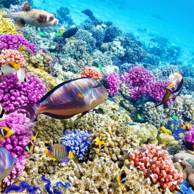 Arrecife Palancar y Colombia