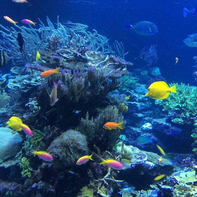 Première activité: Barrière de corail Ixlaché